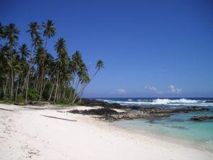 palm-trees-59_960_720